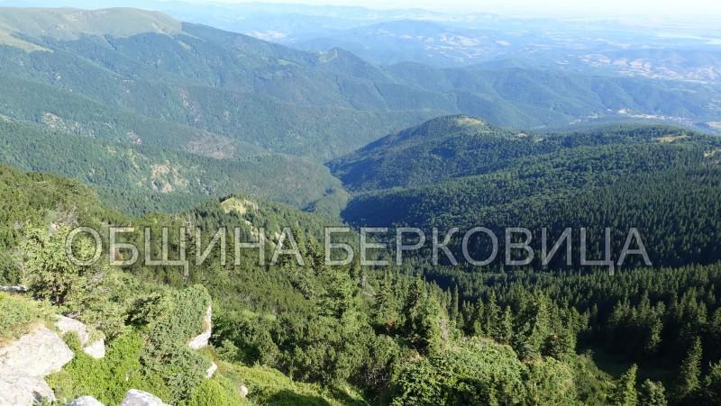 Празник на малината в Берковския балкан